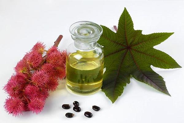 Các bộ phận của cây thầu dầu tía đều là dược liệu làm thuốc