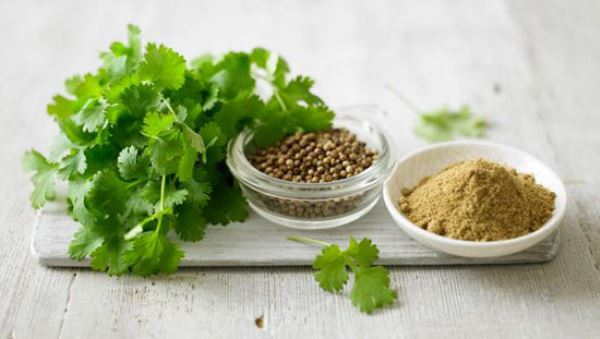Cả lá và hạt rau mùi đều có thể dùng điều trị bệnh trĩ