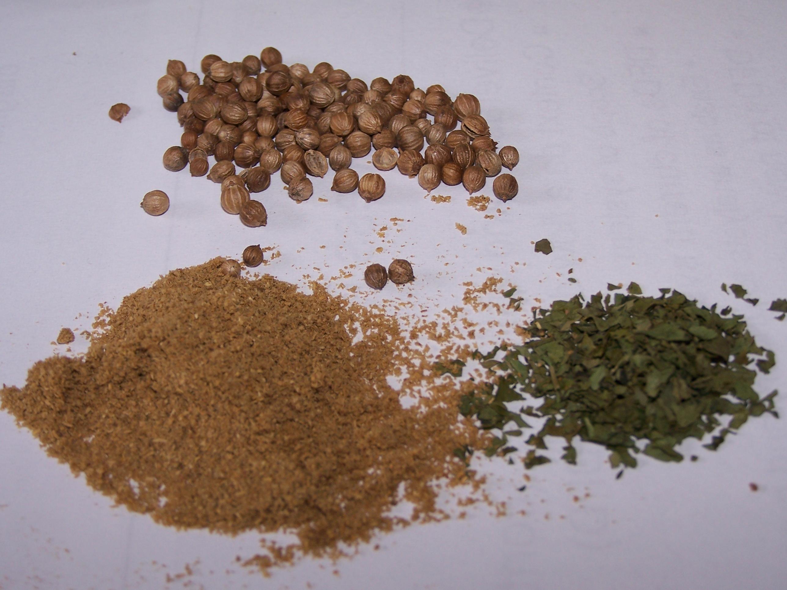Hạt rau mùi điều trị bệnh trĩ cho kết quả cao