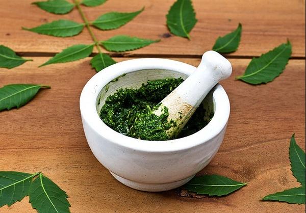 Cách chữa bệnh trĩ bằng rau mồng tơi tại nhà