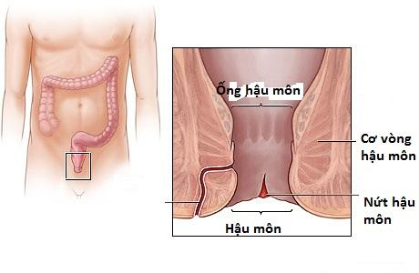 Bệnh nứt kẽ hậu môn- bệnh hậu môn thường gặp